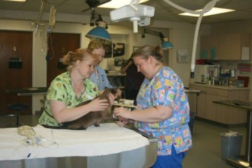 Image 1 | Animal Care Unlimited