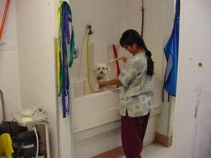 Image 6   VCA West Bernardo Animal Hospital