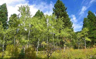 LOT-10 Cottonwood Ranch Trail Bozeman
