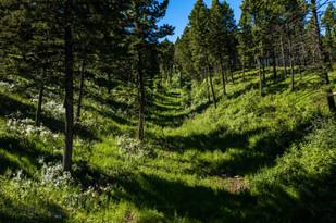 TBD Elk Ridge Road Livingston