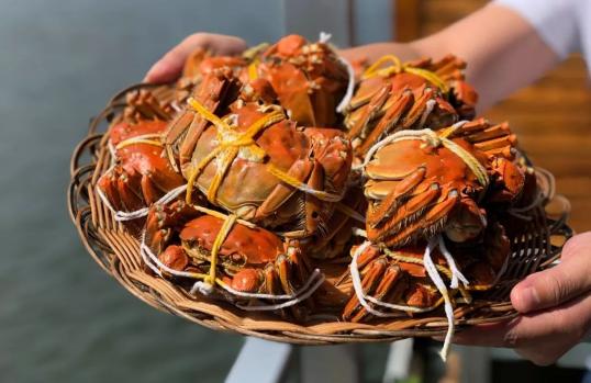 大闸蟹绑着活的久还是松开活的久 螃蟹绑着绳子能活多久