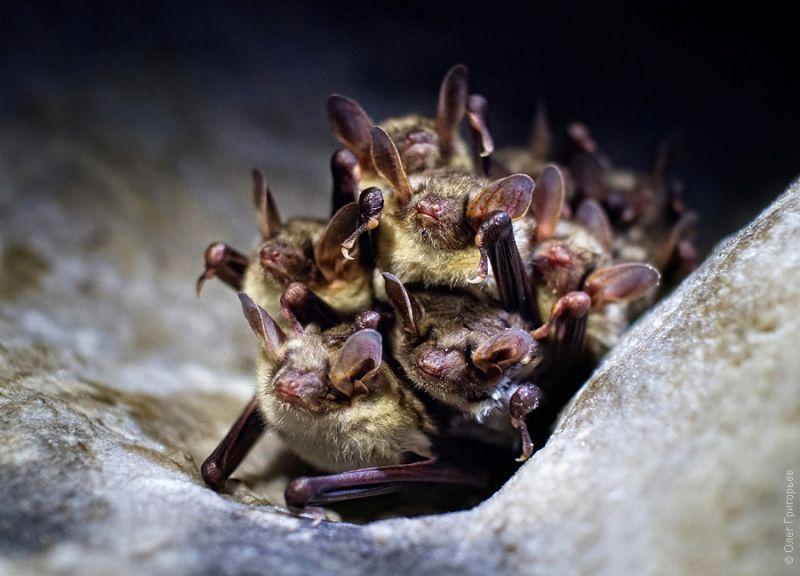 Жителі печер фото: Олег Григор'єв
