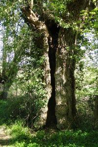 La vie secrète de l'arbre (Sortie nature)