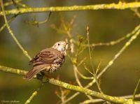 Hivernants et estivants,chassé-croisé migratoire chez les oiseaux ( Réserve Naturelle)