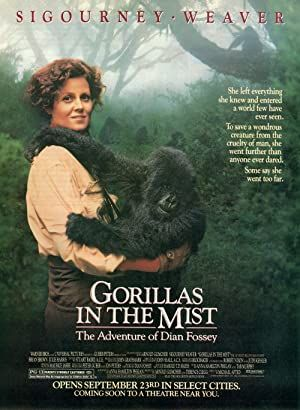 Gorillas in the Mist