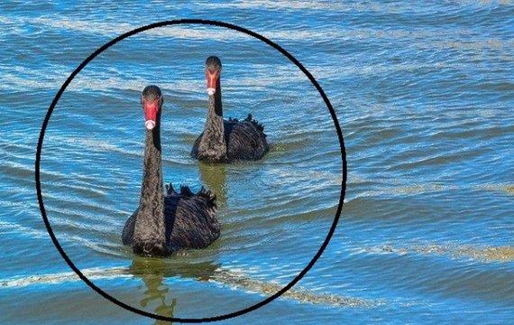 Заслонит ли чёрный лебедь наше будущее?