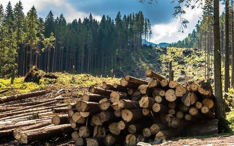 ДБР викрило незаконну вирубку лісу майже на 15 мільйонів гривень