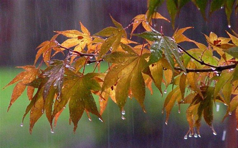 В Україні стане прохолодніше та пройдуть дощі