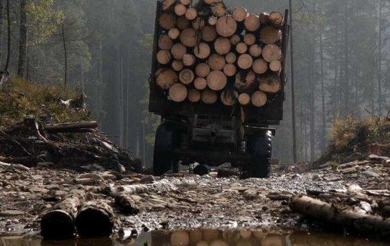 Не говорити, а діяти: чому необхідно зупинити корупцію і схеми на ринку деревини