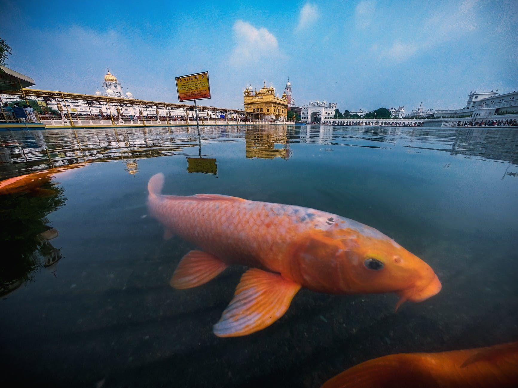 goldfish in pond near temple