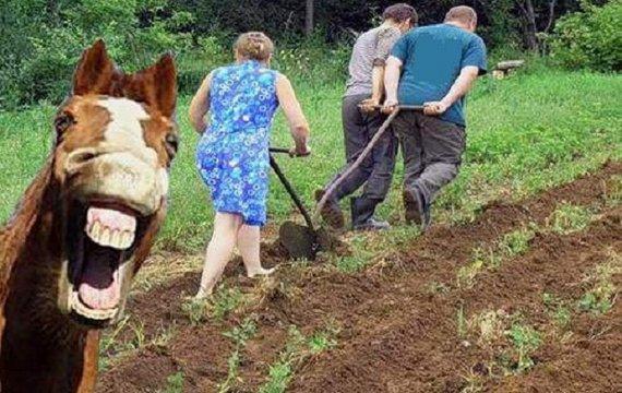 Картопляна революція