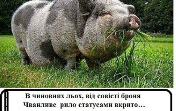 Свинота ви, безсовісна….