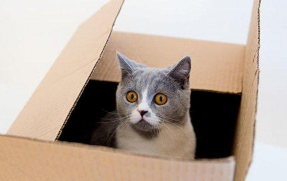 Котики небайдужості, або квантова лірично-фізична теорія Майдану.