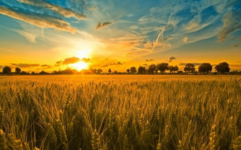 5 кроків розумної земельної реформи