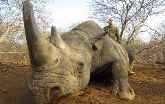 Шуфрич убивал редких животных или почему кого-то давно не били?