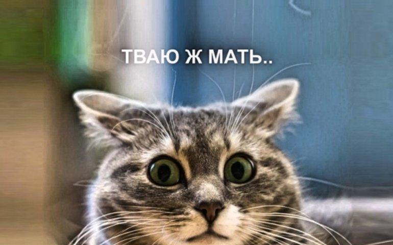 Show отпетых ъбаньків..