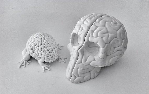 Как на самом деле работает нейромаркетинг?