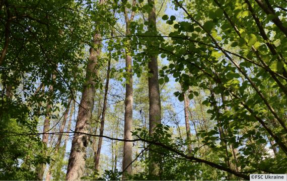 Лісова опікунська рада про результати форуму Україна 30. Екологія