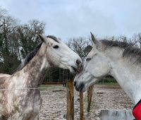 Les chevaux aussi ont besoin de contacts!