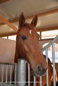 Sept ans, l'âge de raison pour mon cheval