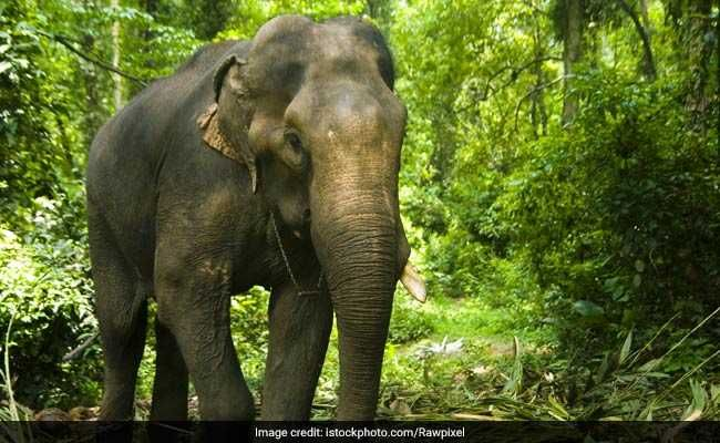 World Elephant Day 2021: Know The Date, History And Significance