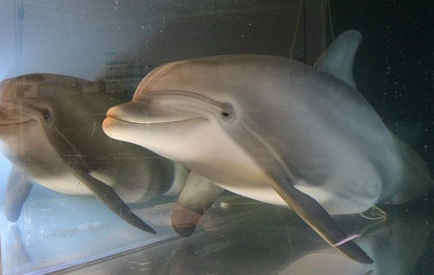 Robot Dolphin That Could Replace Captive Animals At Theme Parks One Day