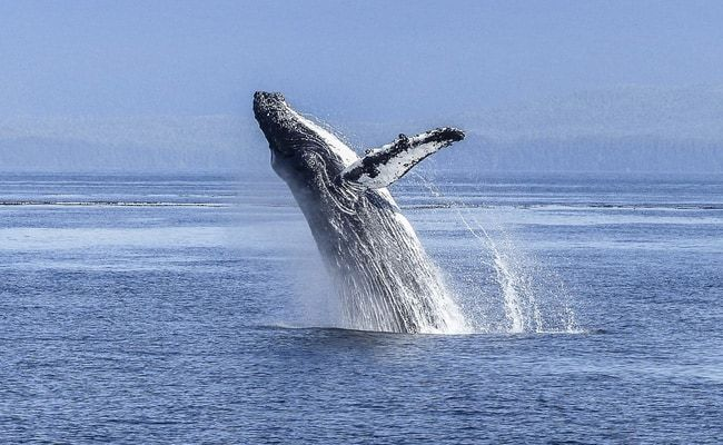 Swallowed And Spat Out By A Humpback Whale. He Describes Those 30 Seconds