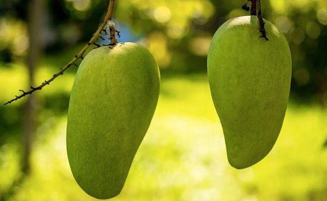 US, China Decline Pakistan's 'Mango Diplomacy', Send Back Fruit Souvenirs: Report