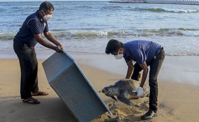 Dolphins, Turtles Killed By Fire-Ravaged Ship: Sri Lanka