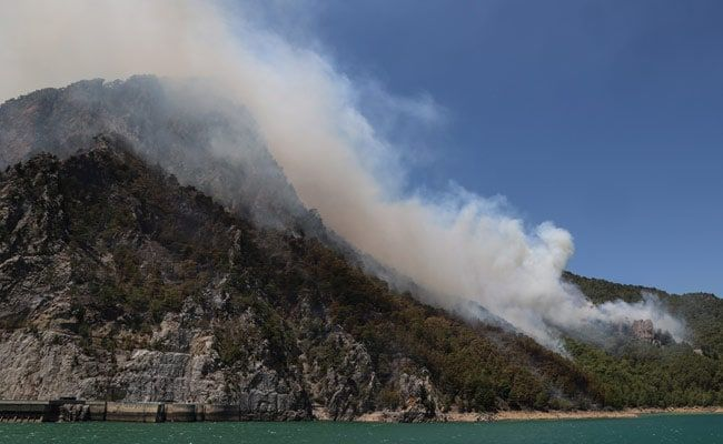 In Turkey Wildfire, Birth Of 'Miracle' Goat Defies Deadly Flames