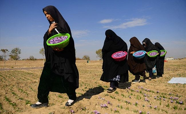'Won't Sit At Home': Saffron Business Powered By Women Looks Taliban In Eye