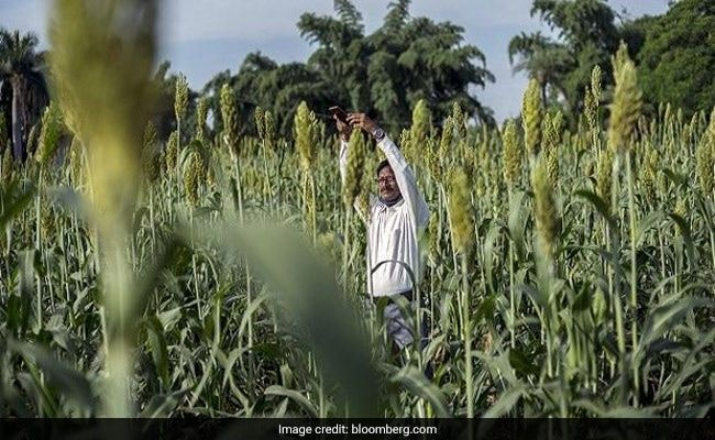 Government Taps Amazon, Microsoft For Farm Tech As PM Modi Eyes Reforms
