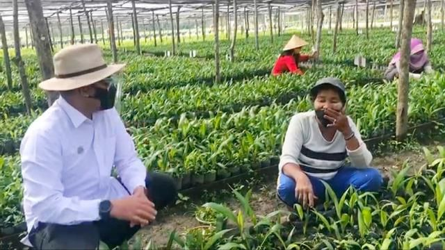 PTPN V CEO Jatmiko K Santosa chats with oil palm nursery workers in Dumai City.