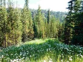 Autumn-Trail Block B Lot 1 Big Sky