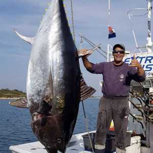original-tuna