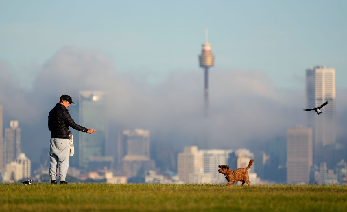 A man gestures to his dog as fog drifts through the buildings in Sydney's central business district, Australia, Friday, June 11, 2021.