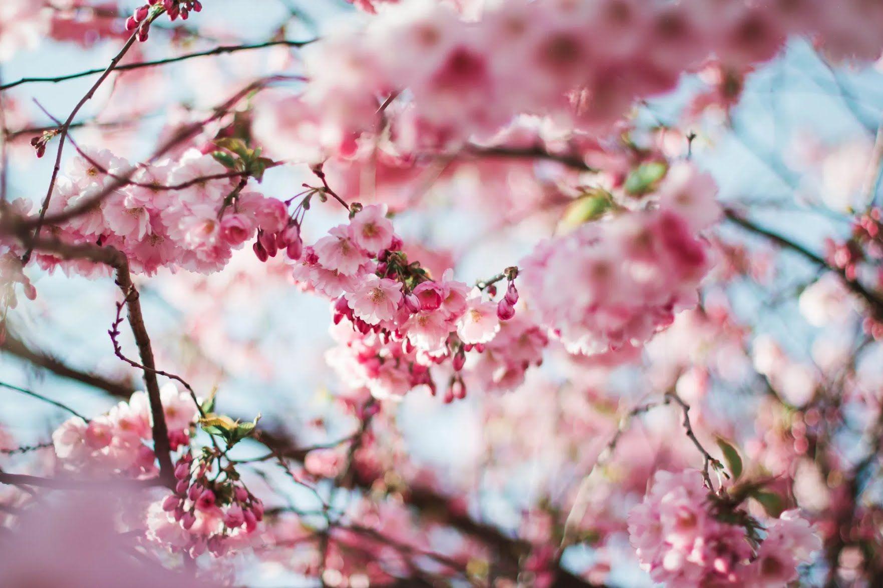 В Воскресенье Светлой недели по традиции встречали весну