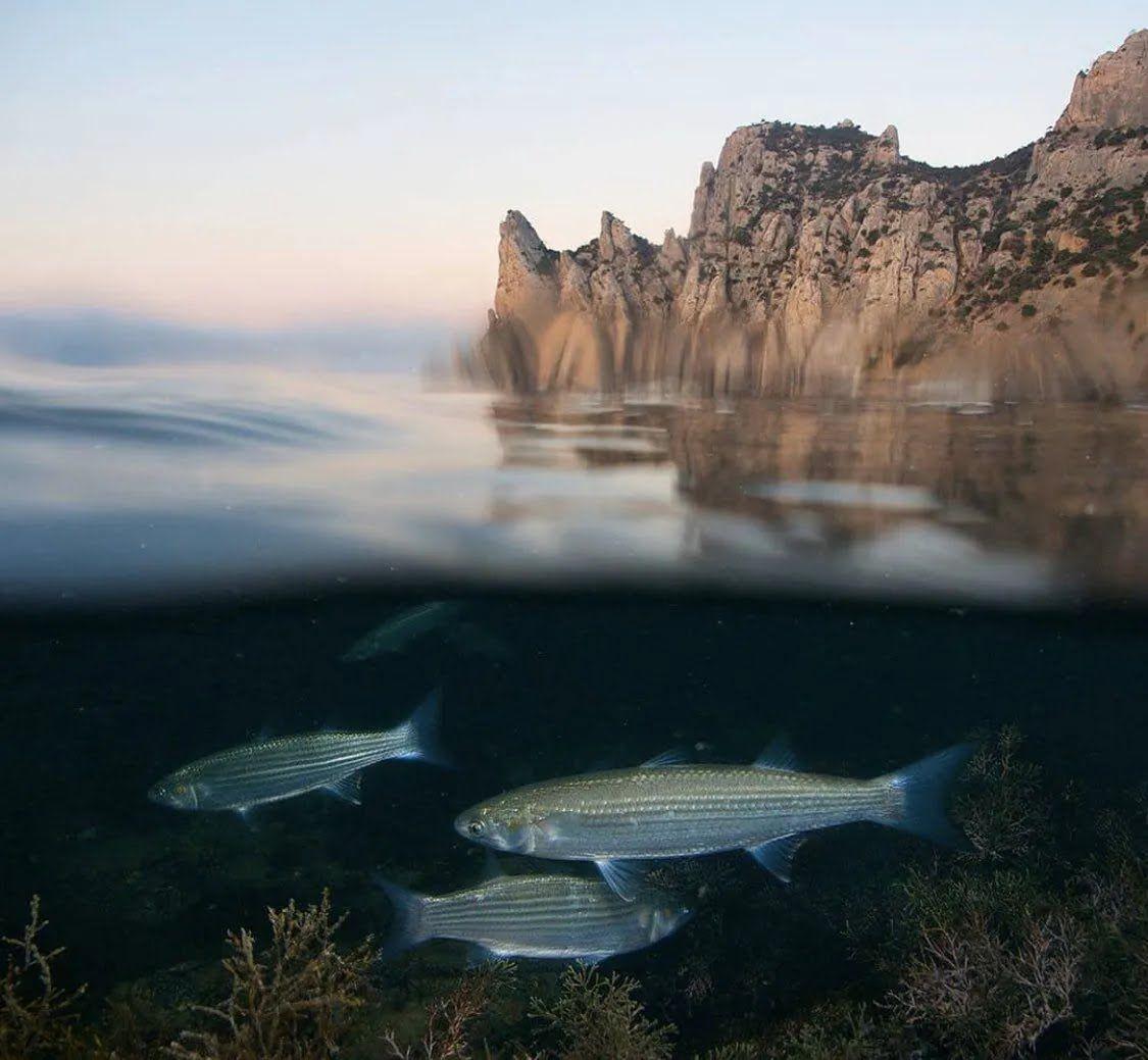 Фото підводного світу Криму, опублікованого представниками РФ