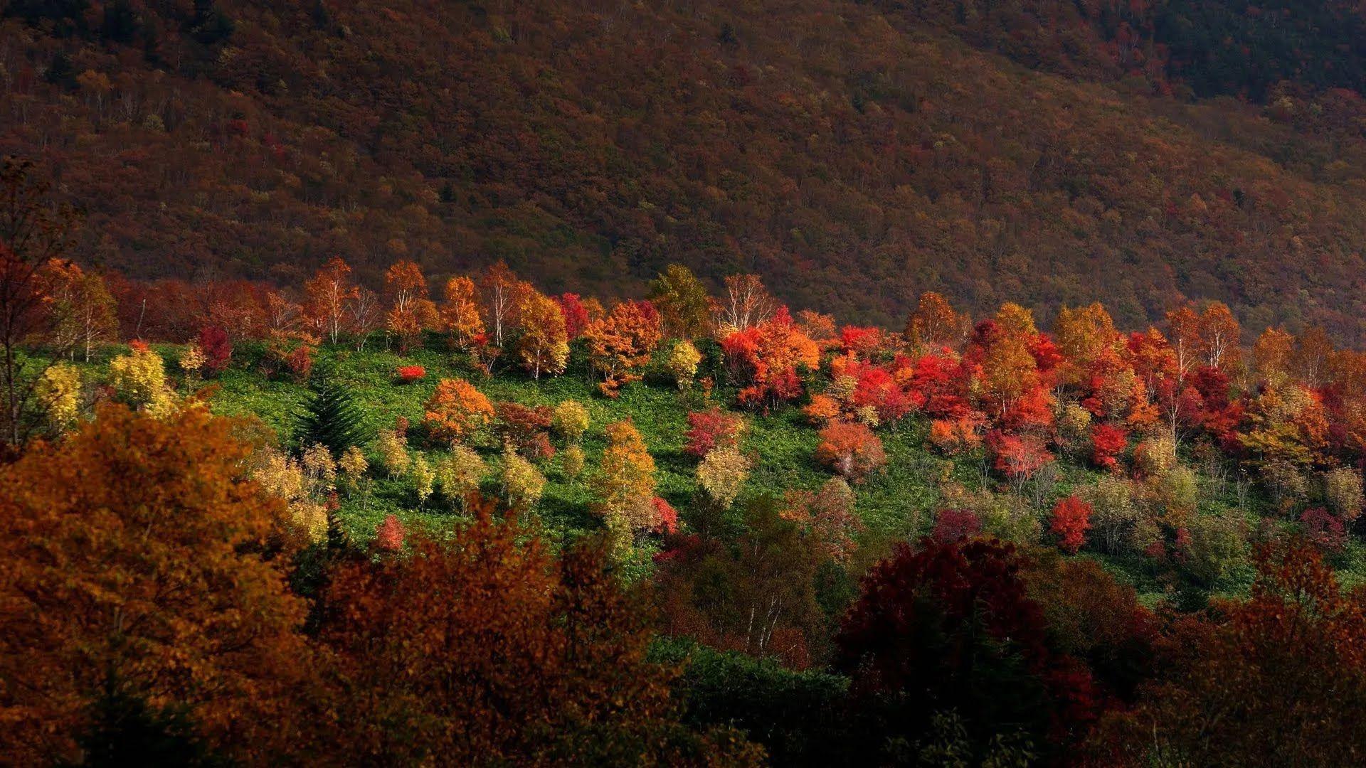 Похолодание начнется с 20 октября.