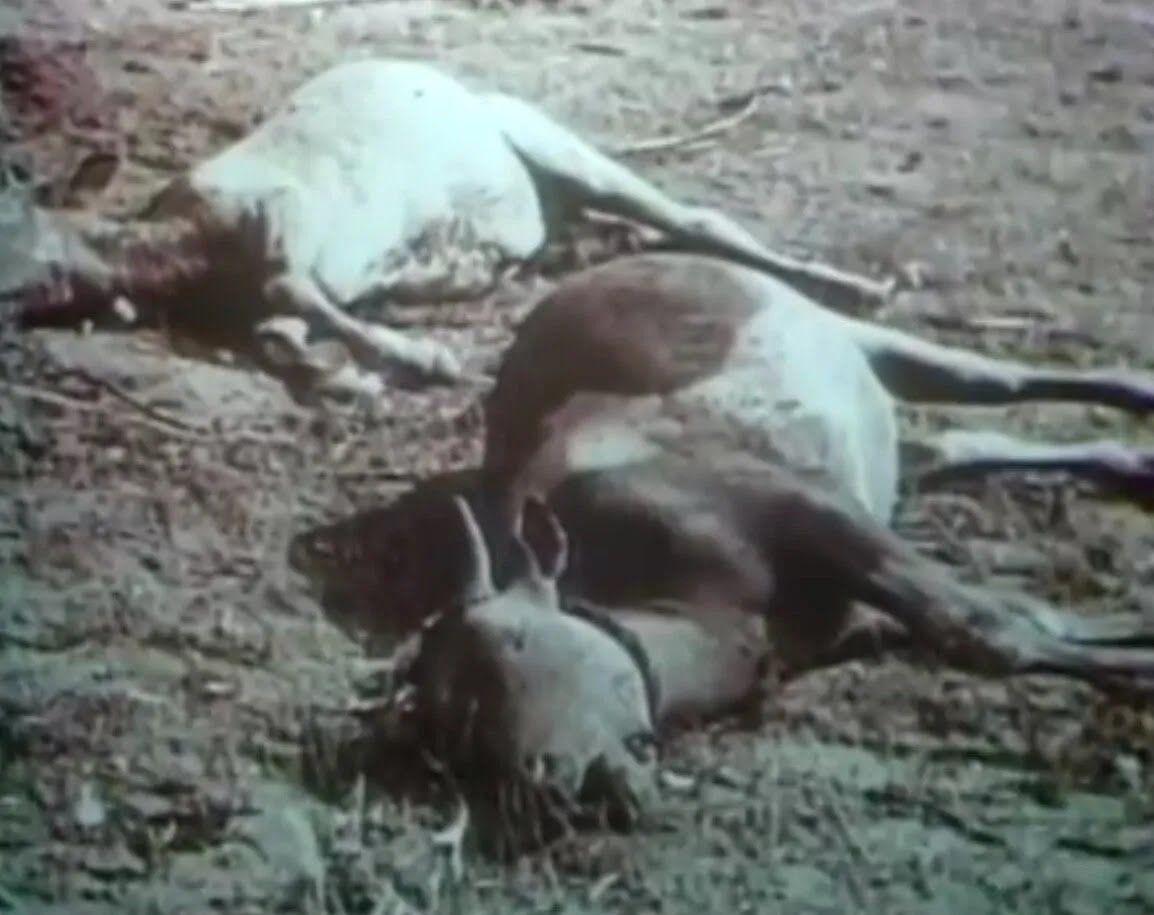Животные на Тоцком полигоне