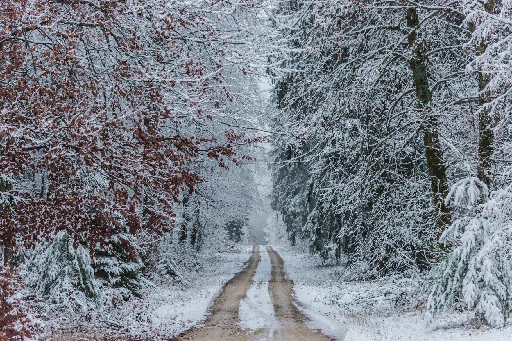 Якщо 26 січня чути шум лісу, то буде потепління.