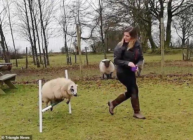 Бекки Ривз научила трюкам овцу по кличке Луна