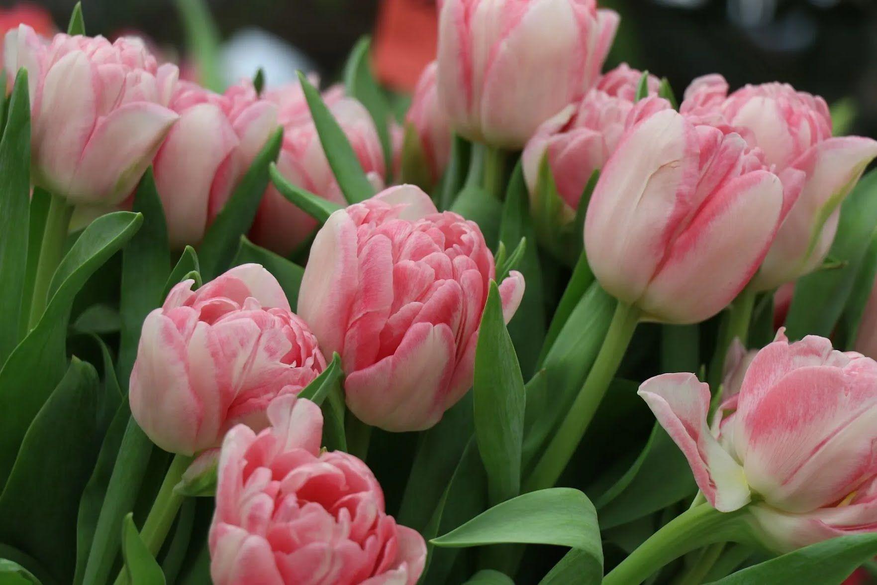 Сотрудникам образовательных учреждений к празднику принято дарить цветы и различные презенты