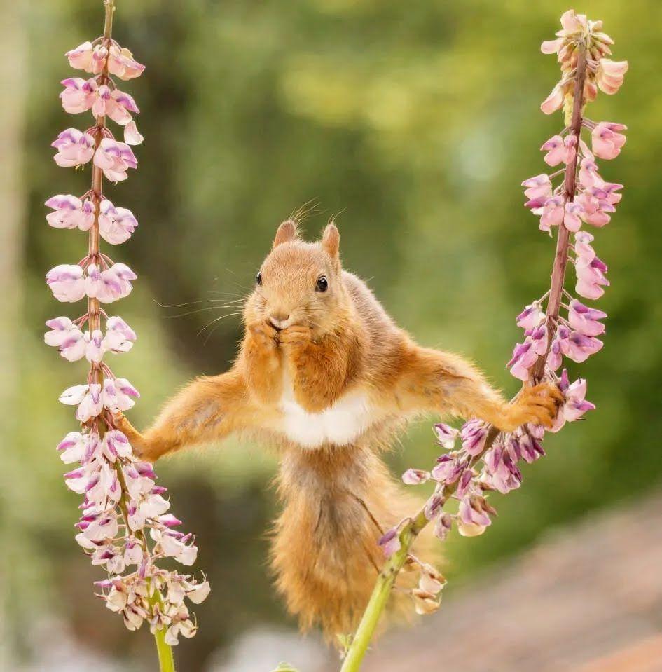 Белка занимается воздушной гимнастикой.