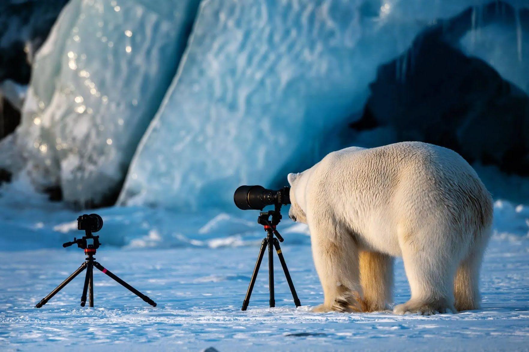 Белый медведь нашел себе хобби.