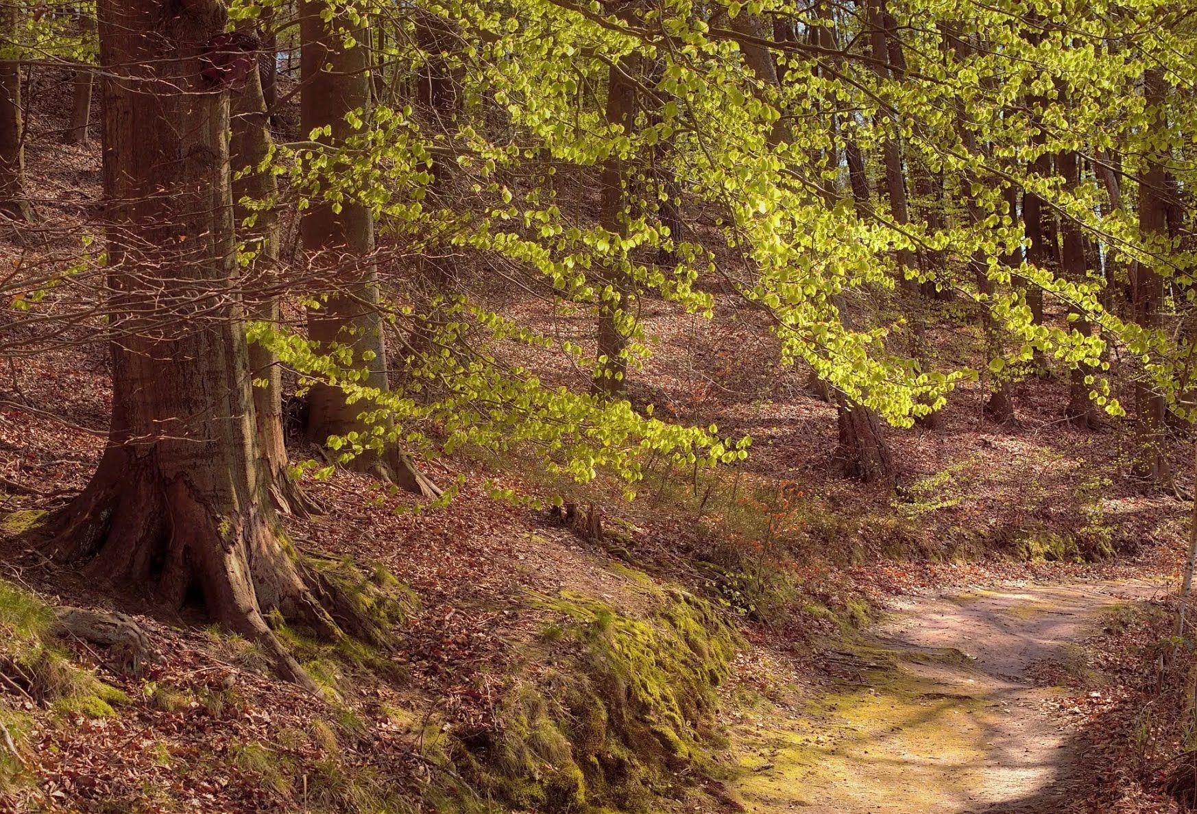 В Александров день принято почитать лес и благодарить его за дары