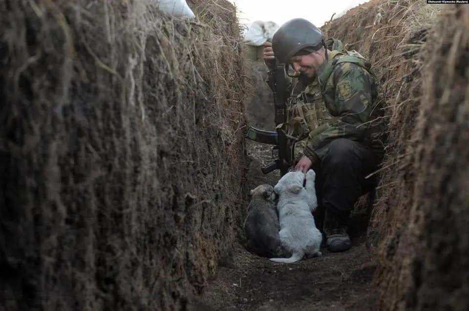 Воин ВСУ сидит в окопе со щенками
