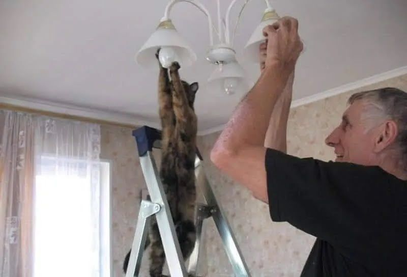 Кошка помогает вкручивать лампочку.
