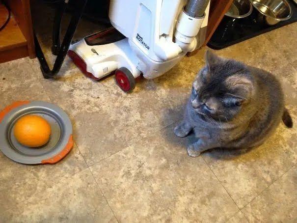 Сын накормил кота апельсином.