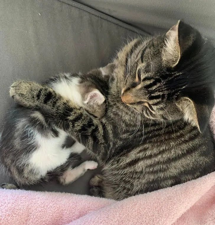 Кот ухаживает за бездомным котиком.